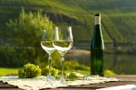 Fiche pratique : l'Alsace n'a pas le monopole du riesling