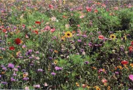 Un beau jardin pour les clients en p riode de canicule for Espace vert synonyme