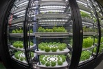 Metro France lance le plus grand potager urbain indoor d'Europe