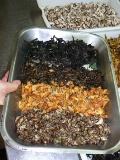 Champignons sauvages c 39 est la saison - Comment cuisiner des trompettes de la mort ...